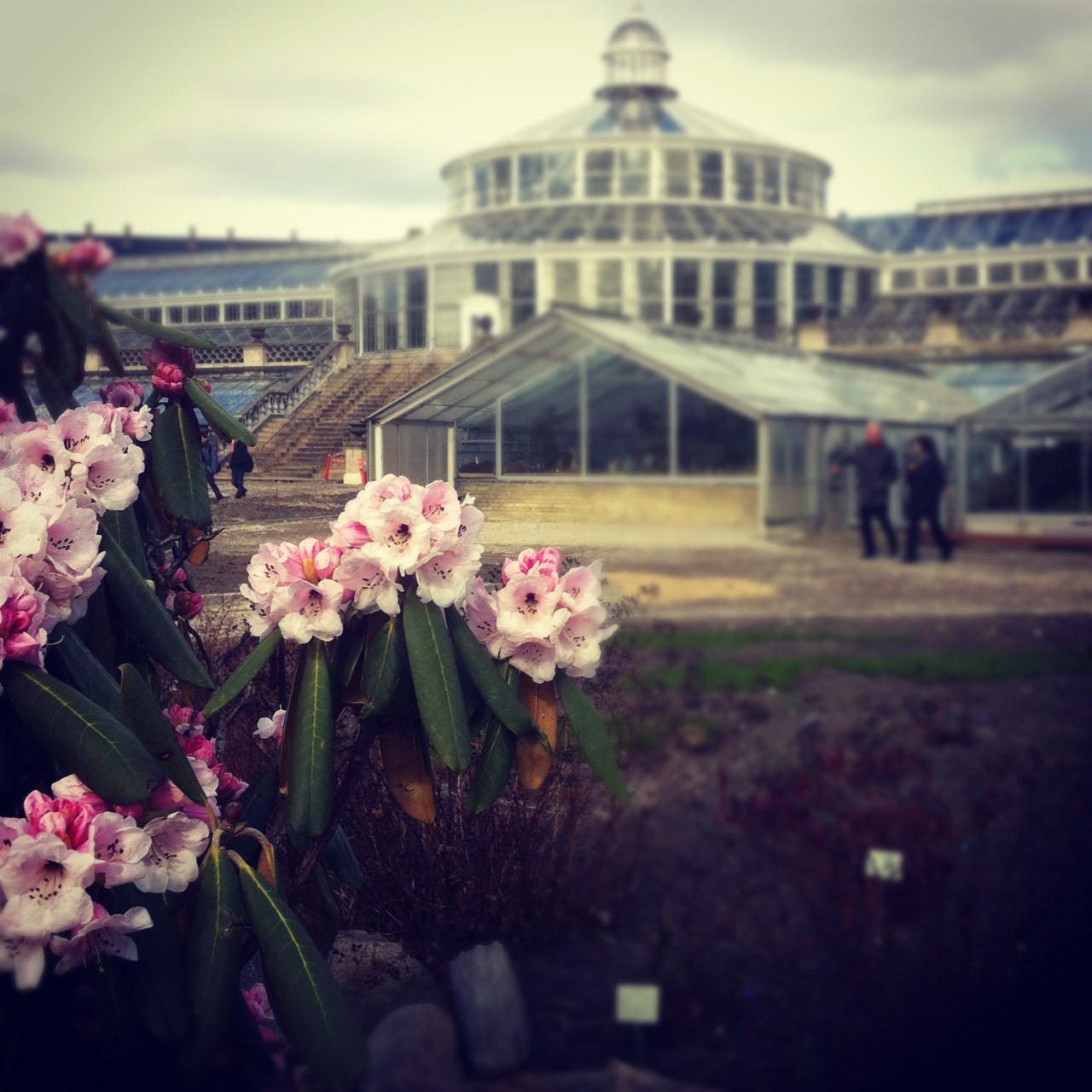 Jardín Botánico de Copenhague. IM